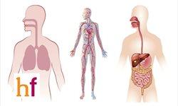 Aparatos del cuerpo humano. Conocimiento del medio con papiroflexia